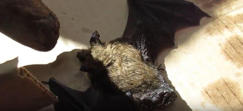 Do Bats Hibernate