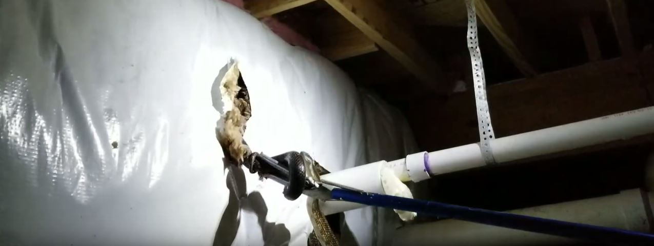 How To Get Rid Of Snakes In The Attic