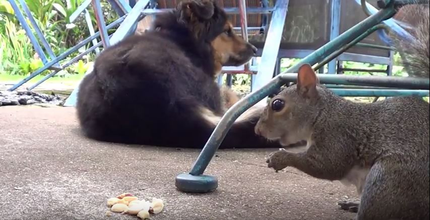 How To Keep Squirrels Out Of Your House